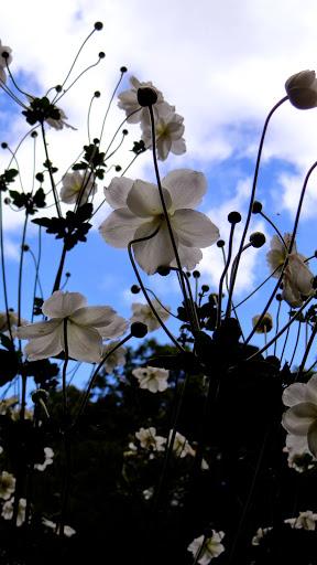 Flowers Highgate Cemetery