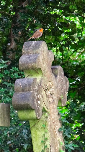 Highgate Cemetery Robin