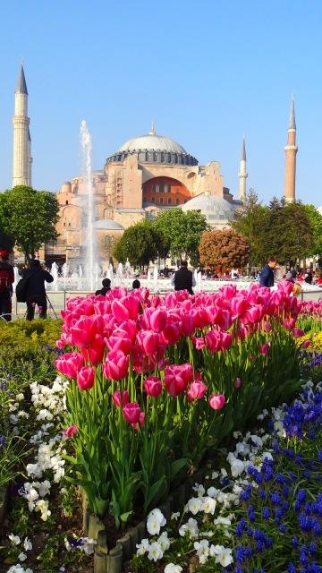 Tulips at Hagia Sophia, Istanbul, Turkey